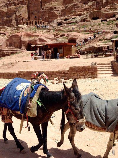 The Explorer - 2014 EyeEm Awards On The Road Hello World Petra