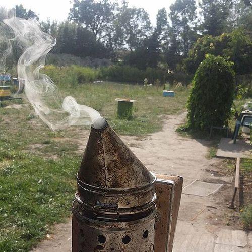 Smoke Dym Bee Pczoła Pszczoły Pszczołą Pasieka Again Apiary UL Kadzenie Czychujwiejaktosienazywa Pczolysiebojo Ustrojstwo Ognień Fire Green Gardening I Oczywiscie L4like Amateur