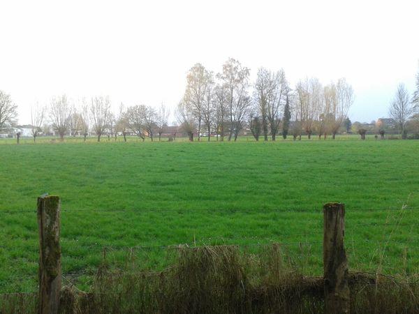 Grassfield In Germany Landschaft Nature Natur Pur :)  Unterwegsunddraußen