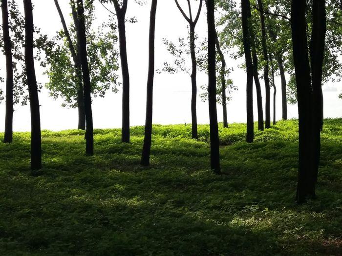 OXgen Nature Trees Green Grasses Shine Bright Shine