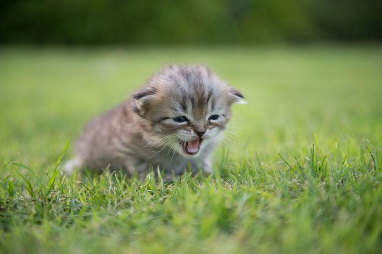 Kitten On Grassy Field