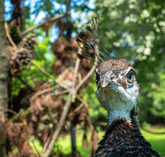 Close-up portrait of a bird on land