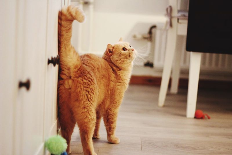 Cat looking away while standing on tiled floor