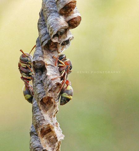 just u and me 😍 #bee #macroinsects #MacroShot #macrophotography #macrophonegraphy First Eyeem Photo