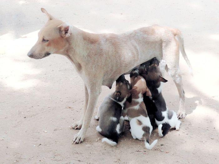 Maternidad Animal Themes Animal Photography Animal_collection Dog Dogs Dogs Of EyeEm Lovephotography  Young Animal Female Animal Animal Themes