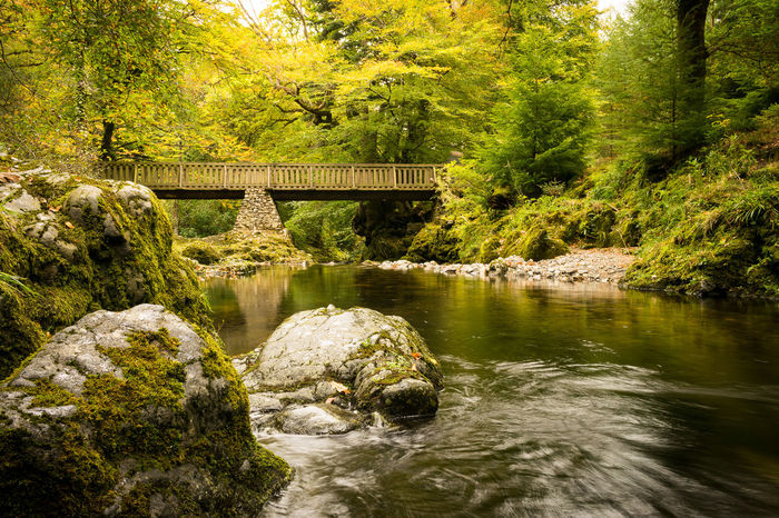 Water No People Nature Tree Reflection Outdoors Day Lake Beauty In Nature Green Color Ireland Landscapes Tollymore Forest Park Northern Ireland Tree Autumn Beauty In Nature Nature Yellow Leaf Fall Beauty Fall Colors Autumn Colors Autumn2017