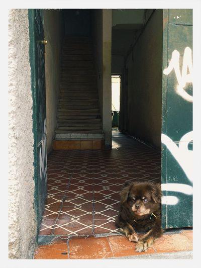 Perro tuerto (One-eyed dog) Perros  Dogs Tuerto Blind