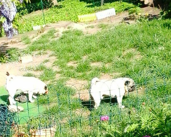 Karins Hundezucht Dresden 01159 Frankenbergstrasse im SilliconenSaxony