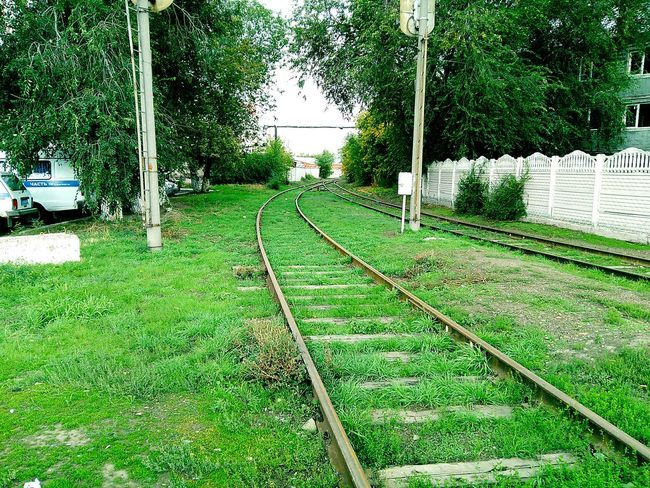 Tree Grass Green Color Railroad Track Day Outdoors Sky Surface Level The Way Forward No People Green Diminishing Perspective Power Line
