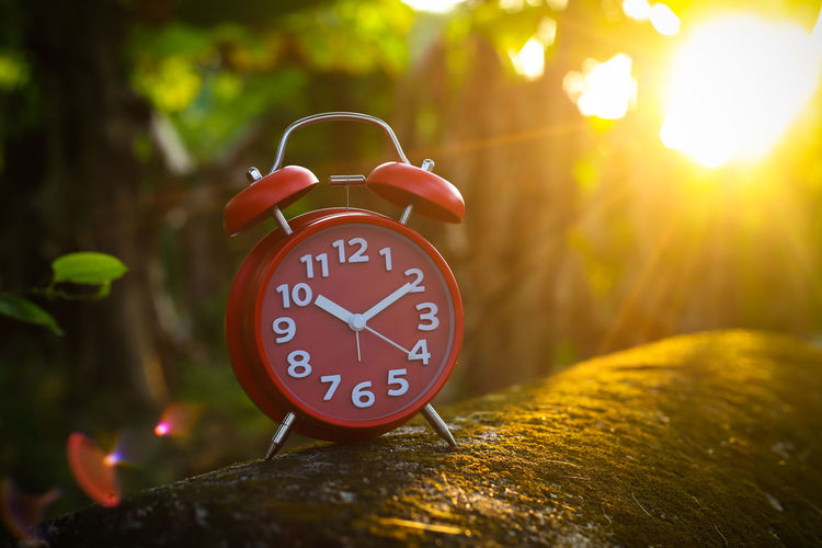 Red Alarm Clock Red Alarm Clock Clock Hand Clock Clockworks Time Alarm Clock Number Clock Face No People Nature Red Tree Focus On Foreground Accuracy Minute Hand Plant Communication Wood - Material Outdoors Close-up Shape Hour Hand
