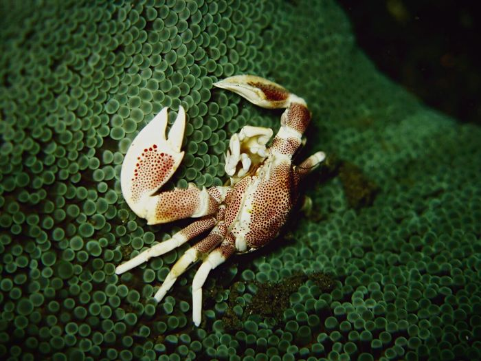 Lil' crab on a coral Holiday Underwater Scuba Diving Crab Nature Animals Small INDONESIA
