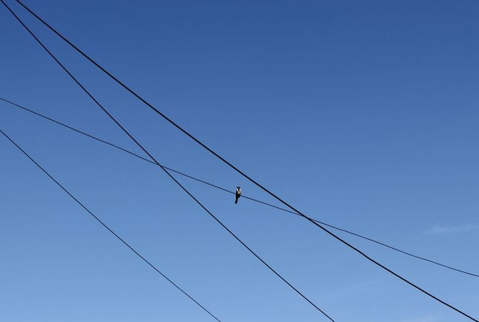 Simple lines Adelaide, South Australia Australia Honeyeater Lines Animal Themes Animal Wildlife Animals In The Wild Bird Blue Cable Centered Clear Sky Day Flying Low Angle View Nature No People One Animal Outdoors Simple Simplicity Sky Spring Telephone Line Wildlife In The City