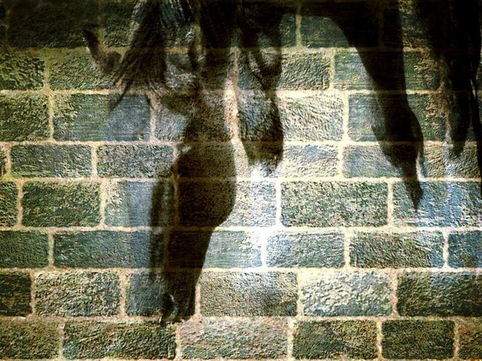 Abstract Blue Brick Brick Wall Grey Horse Horses Paint