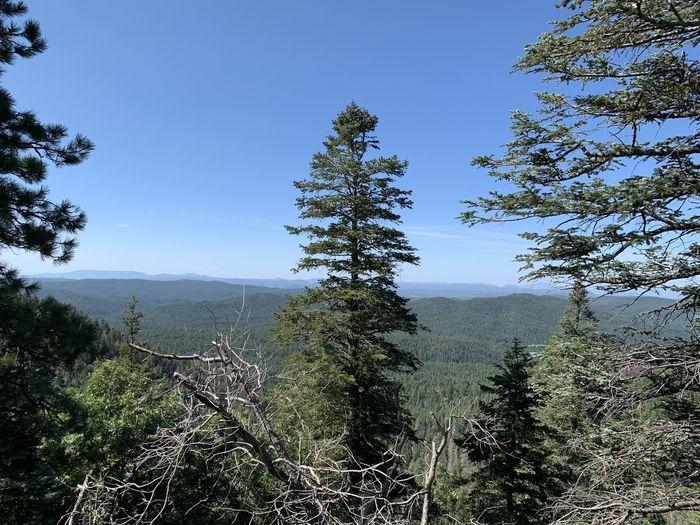 Forest Arizona