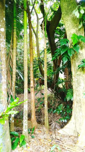 Outdoors Growth Nature Green Color Beauty In Nature No People Tree Day Natural Light Freshness Close-up Rainforest Australia