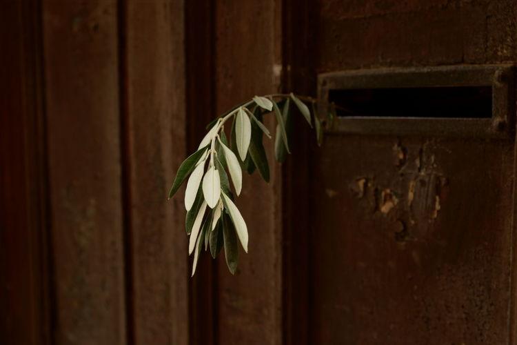 Close-up of mailbox on wooden door