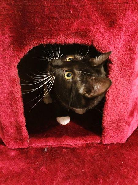 Cat Gatto Katze Muss Man Sein Animal Themes One Animal Cute Cat 😻 Süße Katze Pets Cat