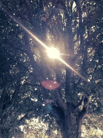 Sun bursting throught the branches. Sky's The Limit Sun Burst Noir Used pudding camera app