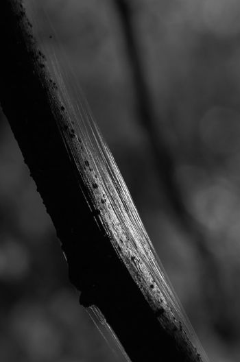 Close-up Focus On Foreground Day Selective Focus Wood - Material Outdoors Textured  Pattern Plant Sunlight Rusty Nature Nature_collection Nature Photography Tranquility Light And Shadow Silk Silk Threads Beauty In Nature EyeEm Nature Lover Blackandwhite Capture Tomorrow