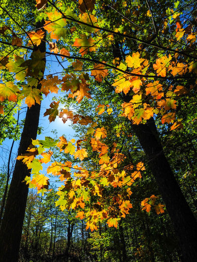 Autumn Beauty In Nature Branch Change Day Flower Forest Growth Leaf Low Angle View Nature No People Outdoors Scenics Tree Tree Trunk Yellow