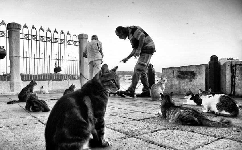 Cats on street against sky