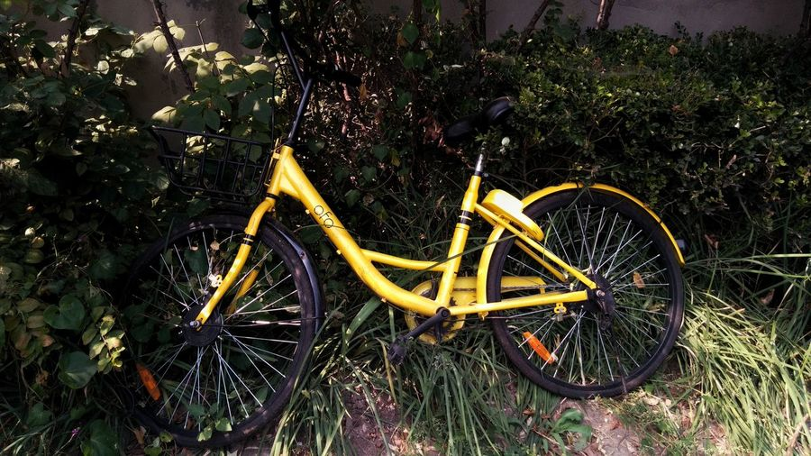 Paint The Town Yellow Bicycle Transportation No People Day Outdoors Grass Nature