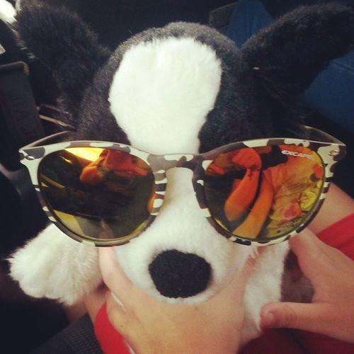 Yospaccotutto Sunglasses Inviaggioversolatoscana Peluche cane sorellina nientedafare incinqueinunautosistaunpostrettini ventottogradi