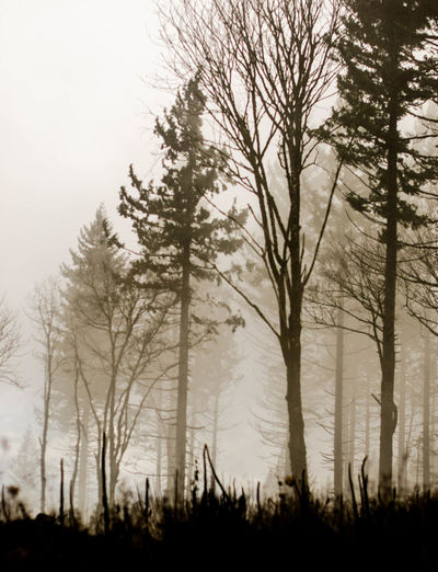 Spooky Bare Tree Beauty In Nature Day Fog Forest Grass Landscape Nature No People Outdoors Scenics Silhouette Sky Tree Winter