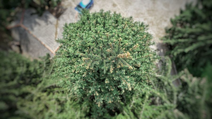 Picea Abies Aerial Photography Field Cactus Close-up Grass Plant Green Color A New Beginning