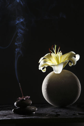 yellow lily on the round vase with black background Flower Flowering Plant Freshness Plant Close-up Lily Lily Flower Floral Petal Nature Summer Blossom White Spring Decoration Color Flora Blooming Bright Bouquet Leaf Green Bud Single Object Pretty Elégance Indoors  Table No People Still Life Flower Head Black Background Fragility Smoke Aroma Aromatherapy Studio Shot Vulnerability  Beauty In Nature Inflorescence Smoke - Physical Structure