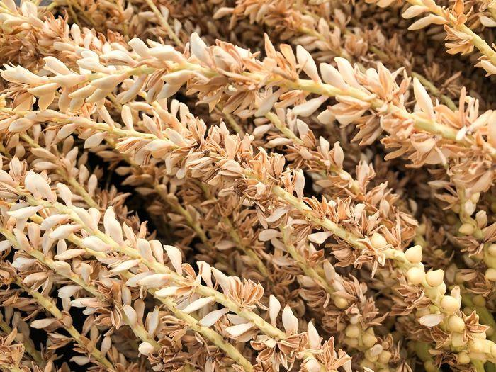 Full frame shot of dry leaves for sale