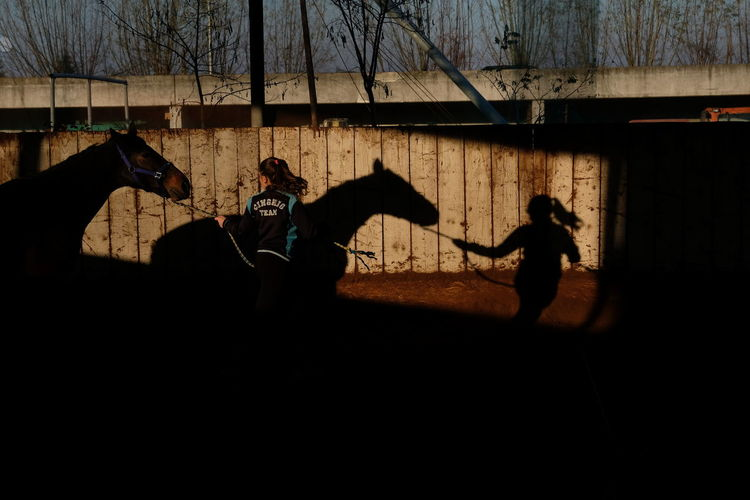 Horses Shadows & Lights Day Horse Photography  Lifestyles Outdoors People Real People Shadow Silhouette Skill