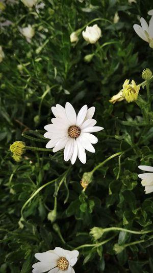 Te atrapo pero... Estoy soñando. Flower Plant Blossom Petal Beauty In Nature Fragility Flower Head