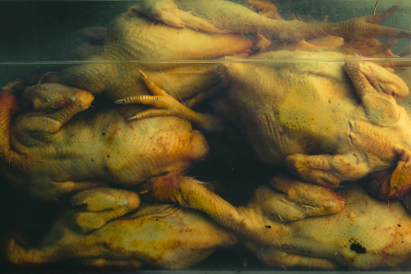Close-up of chicken meat in water