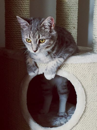 Cat Kitten Climbing Climbing Cat Cattree Cute Pets Pet Pets Animal Animal_collection Animal Photography Catphotography Kittenphotography