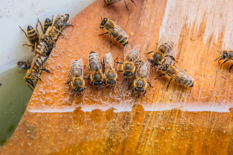 Animal Animal Themes Animal Wildlife Animals In The Wild APIculture Beauty In Nature Bee Beehive Close-up Day Group Of Animals Honey Bee Insect Invertebrate Large Group Of Animals Nature No People Outdoors Wood - Material Zoology
