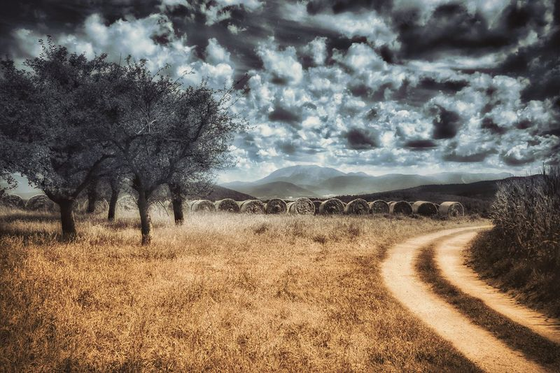 The Way Forward Landscape Grass Road Tree Tranquil Scene Diminishing Perspective Tranquility Dirt Road Cloud - Sky Scenics Non-urban Scene Nature Vienna Alps Landscape_photography Austria Global Photographer-Collection Melancholic Landscapes Mountain Range Beauty In Nature Mystical Atmosphere Dramatic Sky