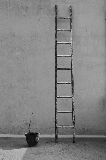Ladder by potted plant against wall