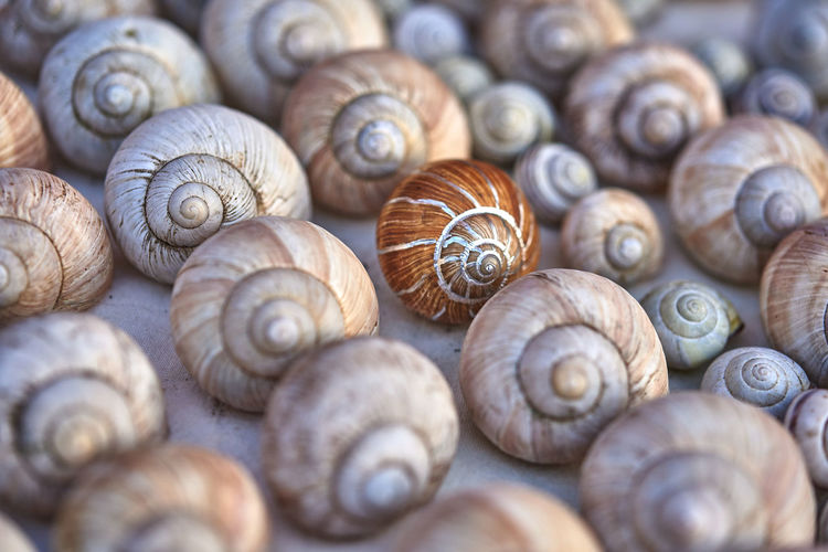Grapevine snail shells collected at my in-laws site. Hard to stop picking them ;) Close-up No People Selective Focus Shell Snailshell Many Of A Kind Many In A Row Different Painted