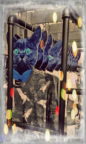 Shopping mal anders...mit Cool Cats  FashionFacts Fashion Killa
