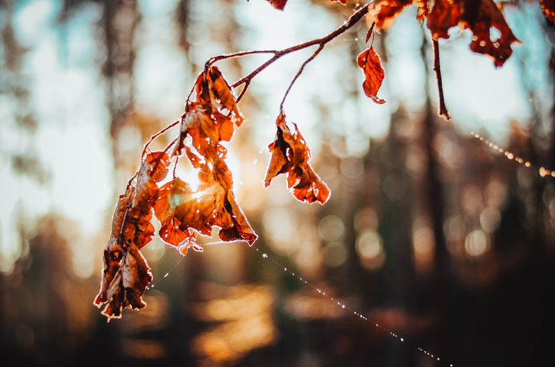 Focus On Foreground Hanging Close-up Plant Tree No People Day Nature Plant Part Leaf Dry Orange Color Outdoors Branch Twig Leaves Growth Autumn Beauty In Nature Fragility Change Dried Sunset Poland Kaszuby