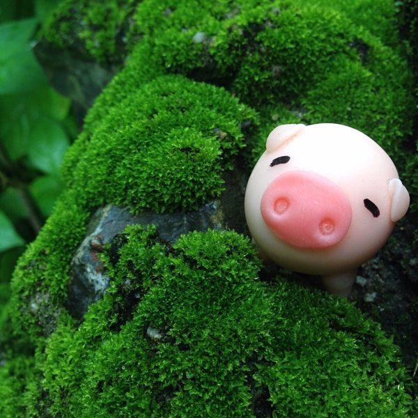 In Nature  Nature_collection Freshness Happy Time Moss Moss & Lichen Moss-covered Moss Covered Tree Moss Covered Rocks Verdant Green Color Piggy Bank Piggybank Piggy♥