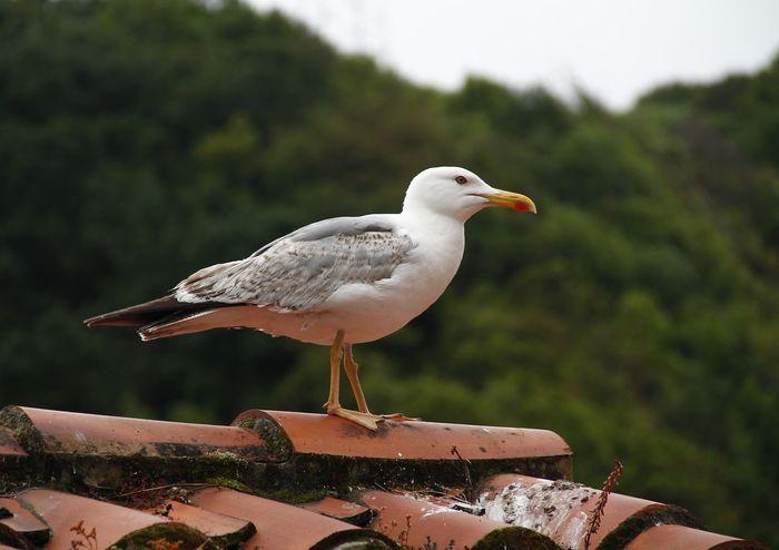 EyeEm Hello World Hi!! No People El Tiempo Detenido EyeEm Gallery Animal Photography