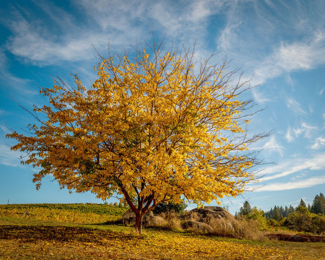 Tree on field against sky during autumn