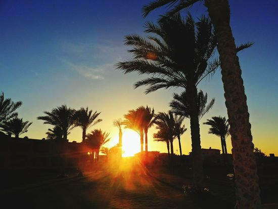 ▶ Les voyages nous ont beaucoup portés, les retours nous ont perdus parfois Sundown Memory Palm Trees Bestholiday EyeEm Best Shots Egypt Holidays Blue Sky Souvenirs