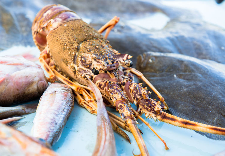 Lobster close-up Giant Lobster Raw Seafood Spiny Lobster Claw Close-up Delicatessen Fish Fish Market Fresh Gourmet Langouste No People One Animal Restaurant Rock Lobster Sea Life
