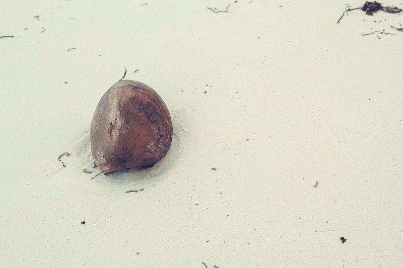Lots of copy space in this shot of a lone coconut against the white sandy beaches of Zanzibar Beach Close-up Coconut Copy Space Day High Angle View Nature No People Outdoors Sand Vacation White Sand Beach Zanzibar Zanzibar🏊🏄🎣