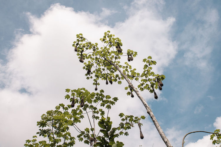 Beauty In Nature Branch Cloud - Sky Ecuador Leaf Low Angle View Nature Nesting No People Outdoors Plant Rainforest Sky South America Tree Trees Wormseyeview Perspectives On Nature