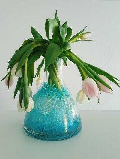 Close-up of tulip flower vase against white background