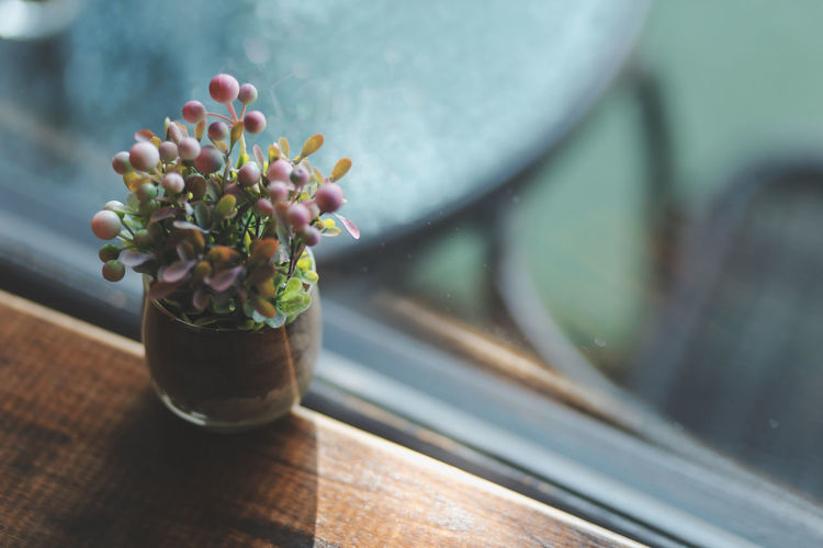 Close-up of potted plant on glass table